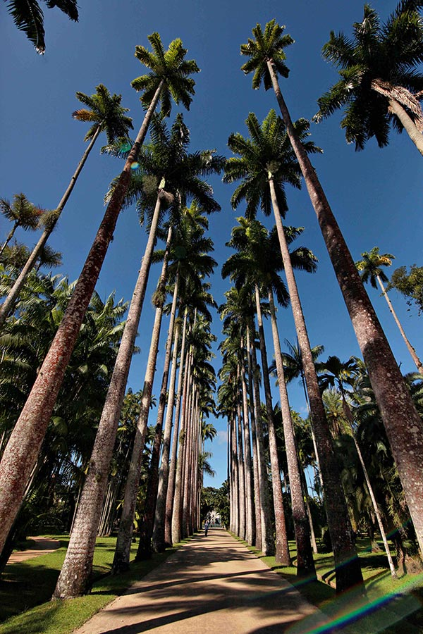 Botanic Garden Rio de Janeiro Jardim Botanico | Mango Tree Hostel Ipanema